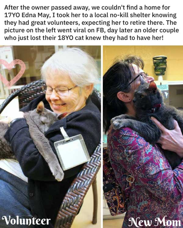 16 People Who Saw A Cat In Need And Came To The Rescue