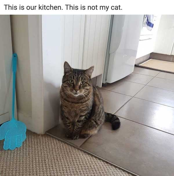 16 Cats That Are Unapologetically And Adorably Rude - Shenhuifu