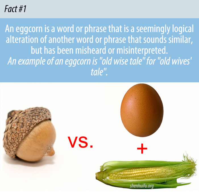 What is An Eggcorn?