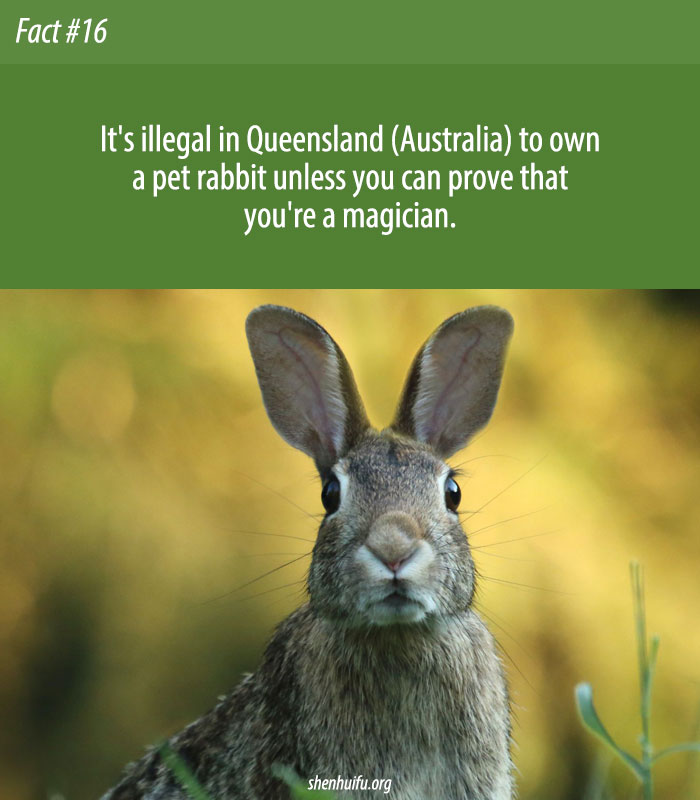 Rabbits Are Illegal in Queensland