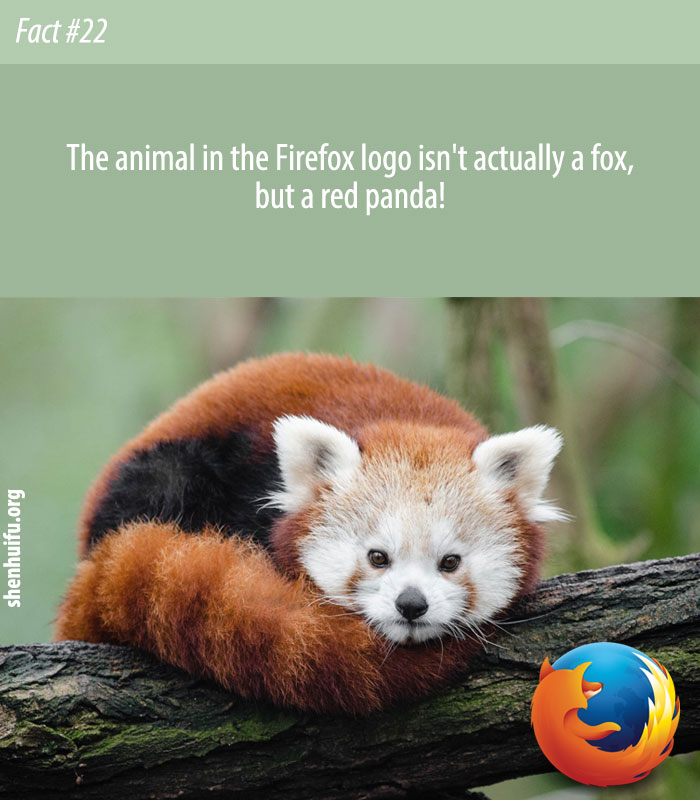 The animal in the Firefox logo isn't actually a fox, but a red panda!