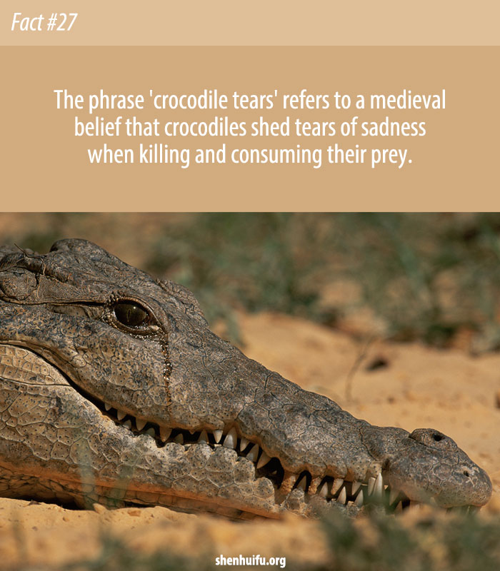 What Does Crocodile Tears Mean?
