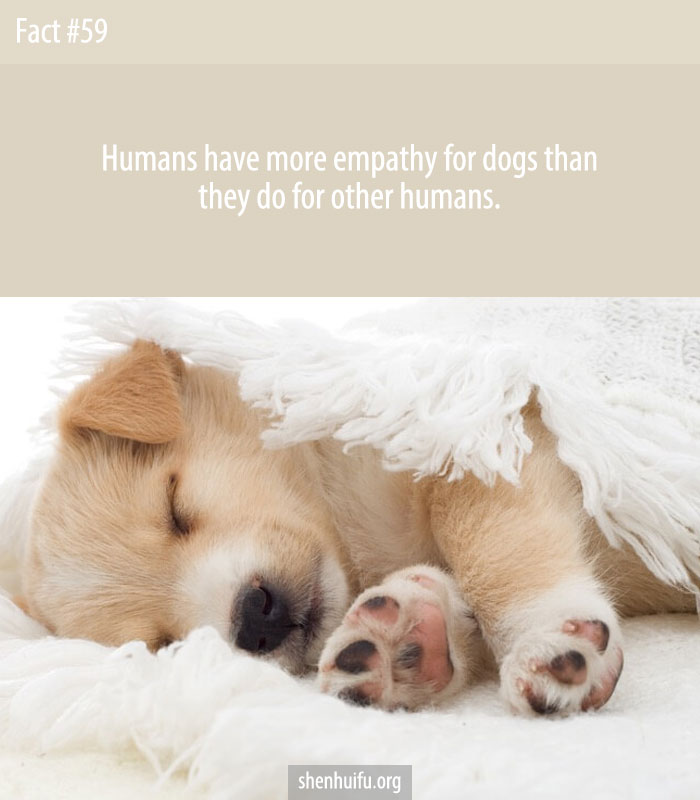 Humans have more empathy for dogs than they do for other humans.