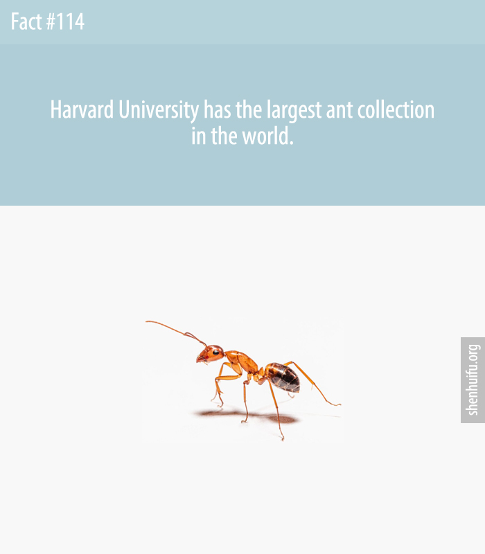 Harvard University has the largest ant collection in the world.