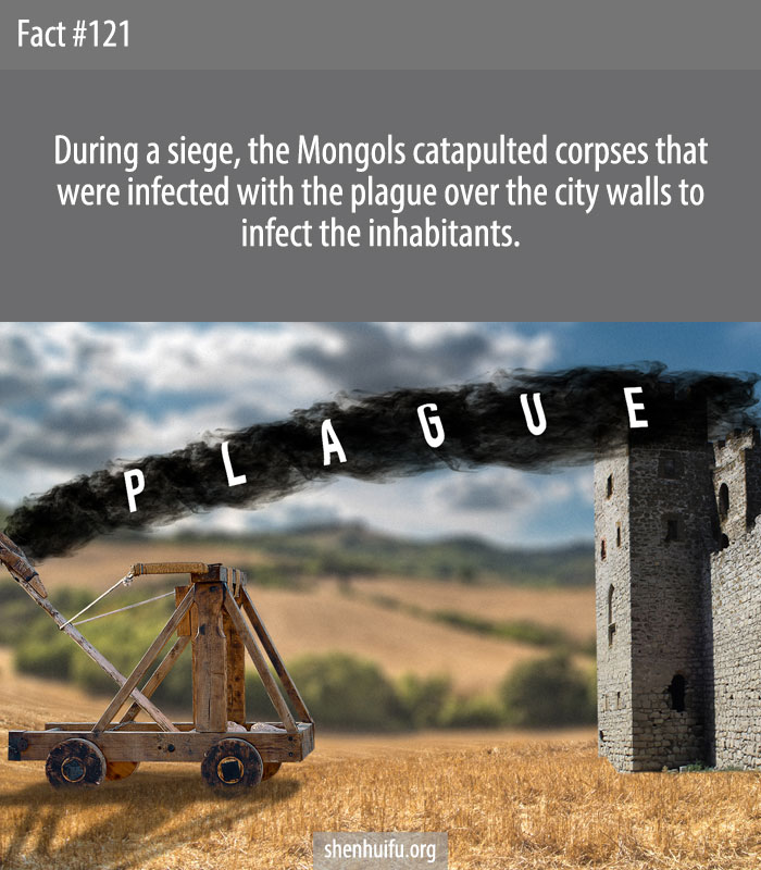 During a siege, the Mongols catapulted corpses that were infected with the plague over the city walls to infect the inhabitants.