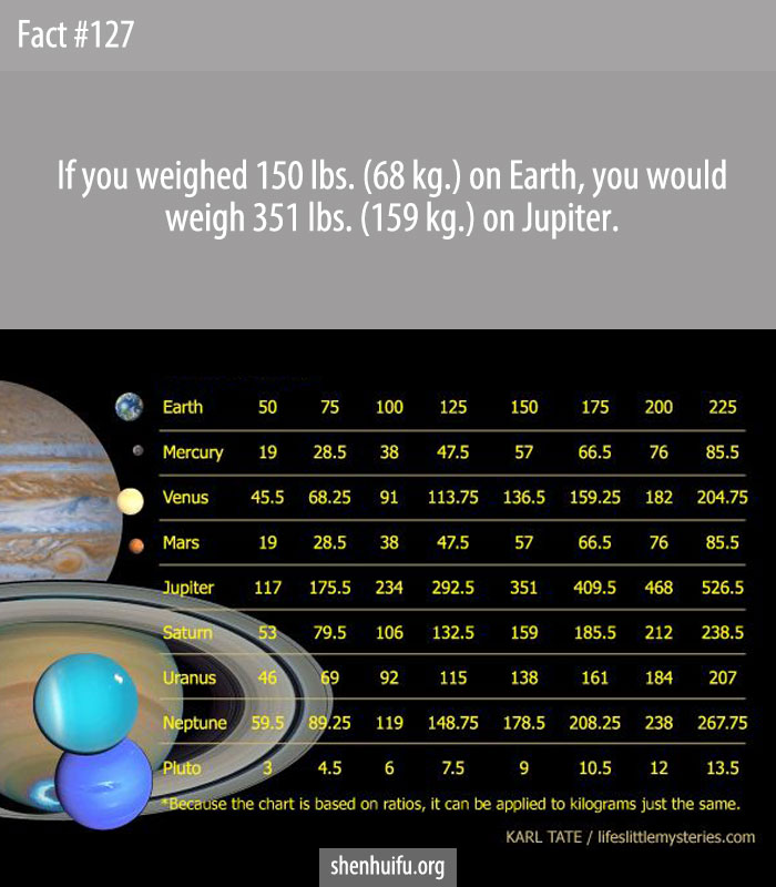If you weighed 150 lbs. (68 kg.) on Earth, you would weigh 351 lbs. (159 kg.) on Jupiter.