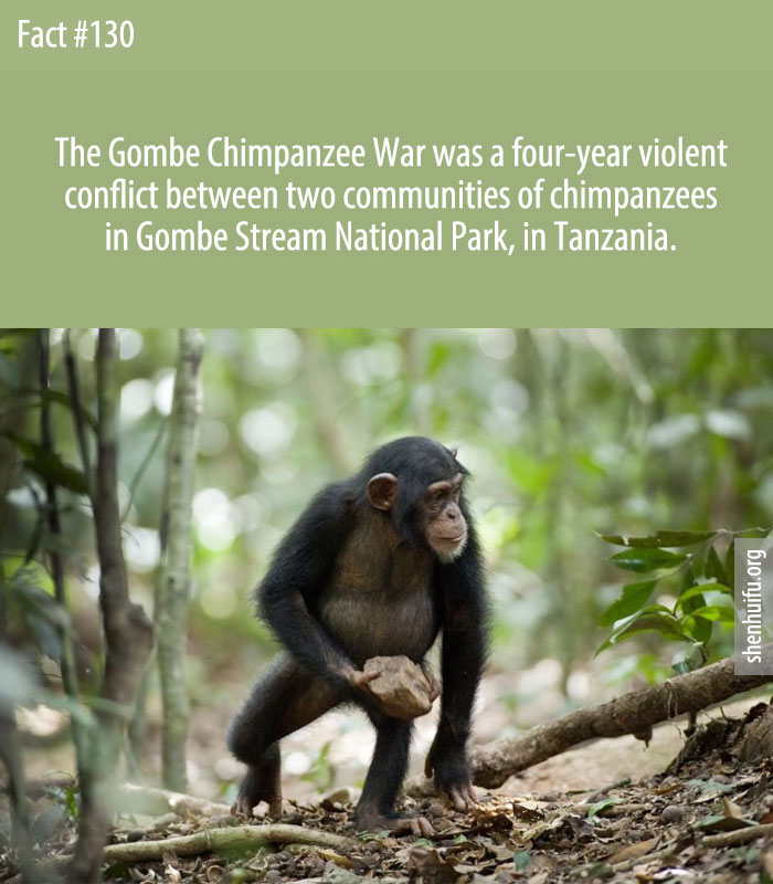 The Gombe Chimpanzee War was a four-year violent conflict between two communities of chimpanzees in Gombe Stream National Park, in Tanzania.