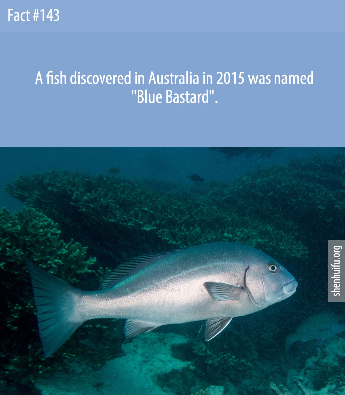 A fish discovered in Australia in 2015 was named 'Blue Bastard'.