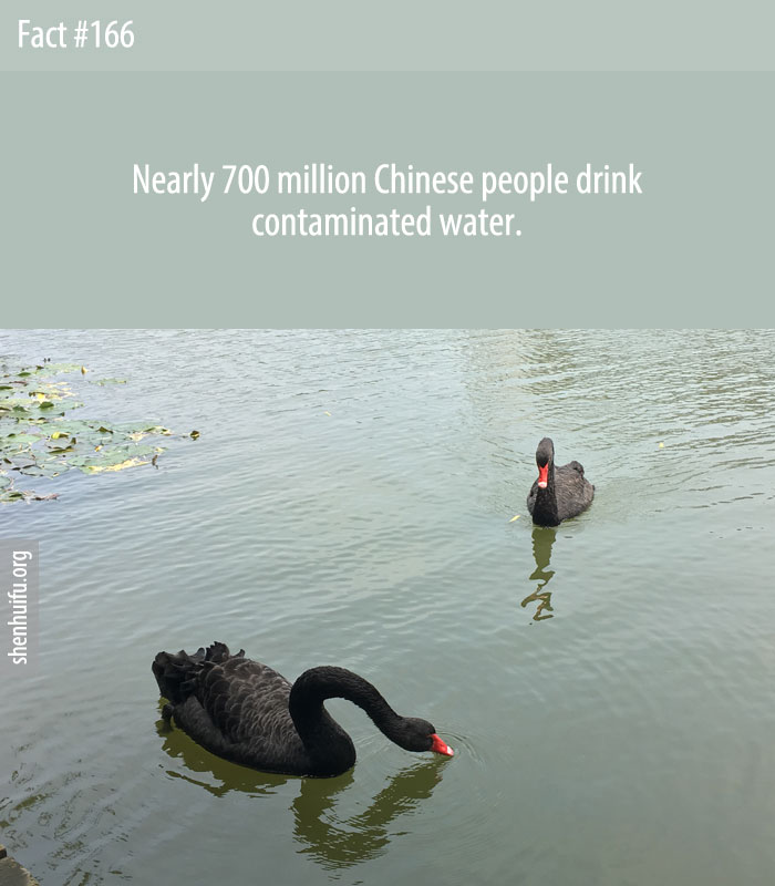 Nearly 700 million Chinese people drink contaminated water.