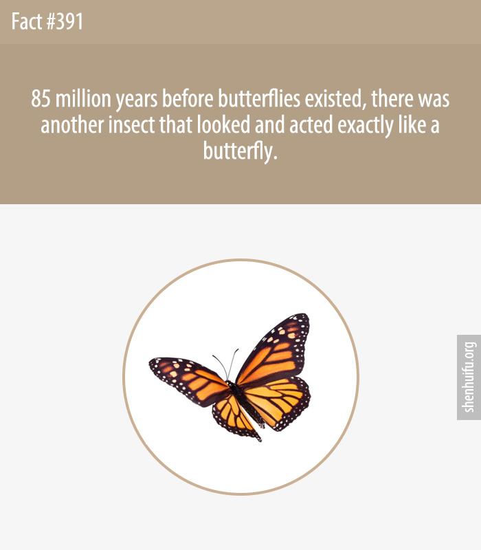 85 million years before butterflies existed, there was another insect that looked and acted exactly like a butterfly.