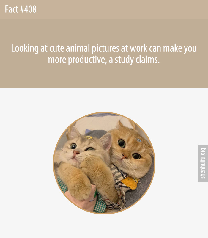 Looking at cute animal pictures at work can make you more productive, a study claims.