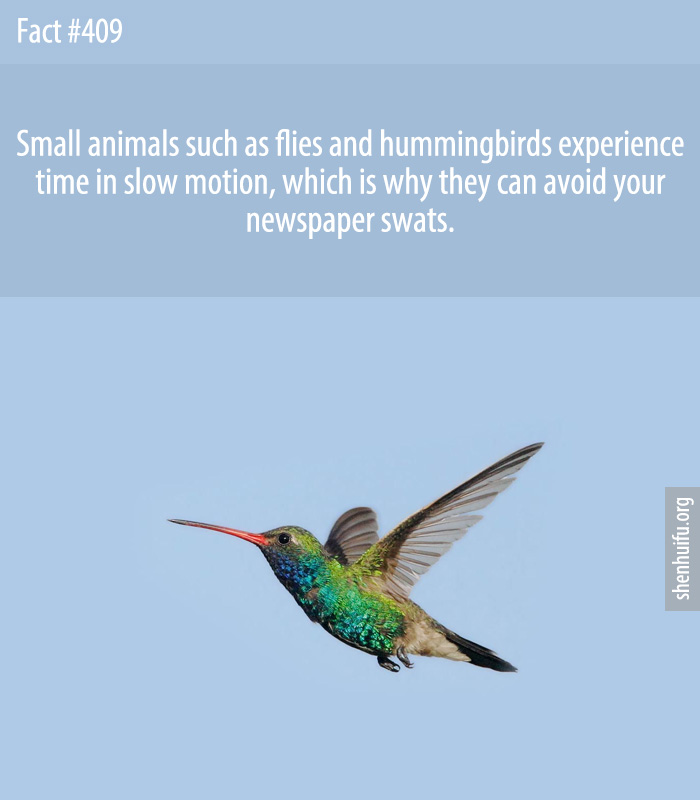 Small animals such as flies and hummingbirds experience time in slow motion, which is why they can avoid your newspaper swats.