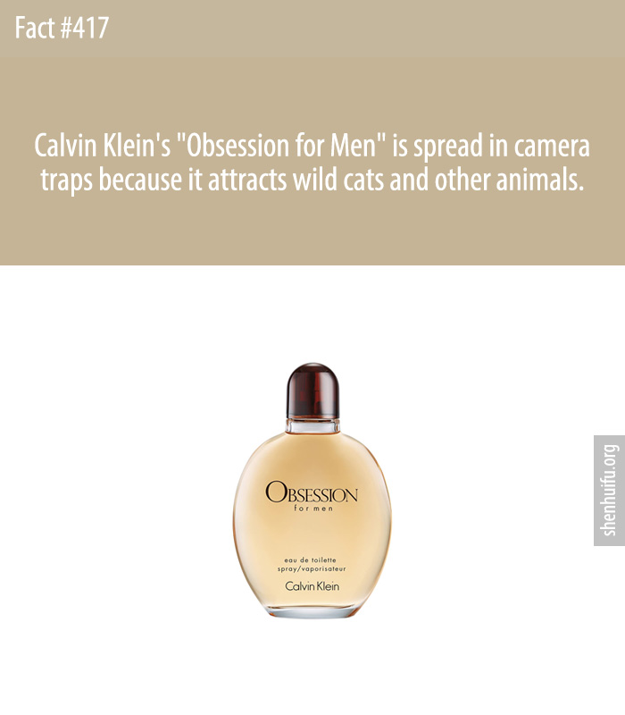Calvin Klein's 'Obsession for Men' is spread in camera traps because it attracts wild cats and other animals.