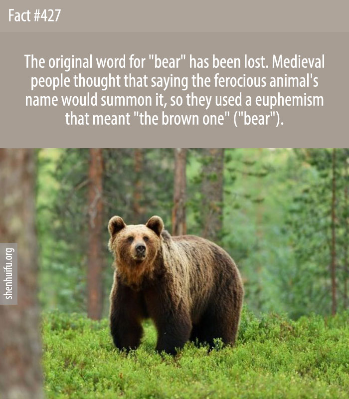 The original word for 'bear' has been lost. Medieval people thought that saying the ferocious animal's name would summon it, so they used a euphemism that meant 'the brown one' ('bear').
