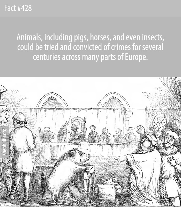 Animals, including pigs, horses, and even insects, could be tried and convicted of crimes for several centuries across many parts of Europe.