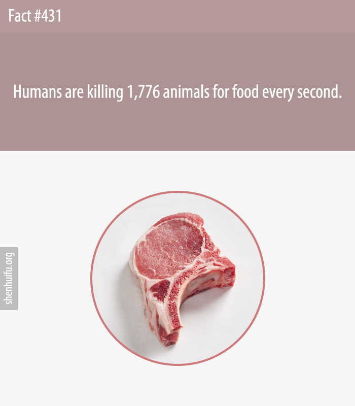 Humans are killing 1,776 animals for food every second.