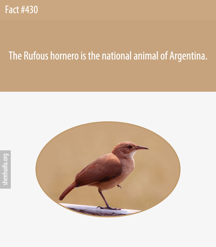 The Rufous hornero is the national animal of Argentina.