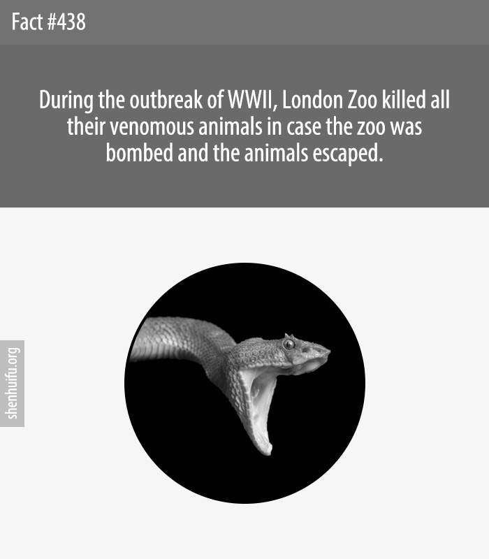 During the outbreak of WWII, London Zoo killed all their venomous animals in case the zoo was bombed and the animals escaped.