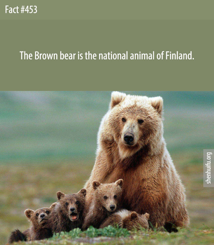 The Brown bear is the national animal of Finland.