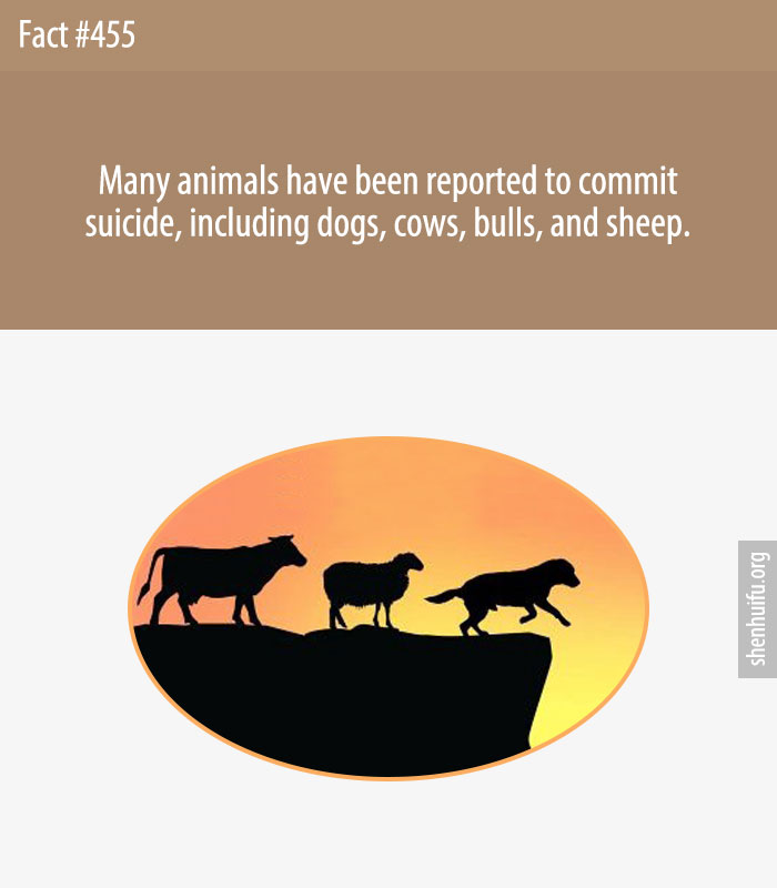 Many animals have been reported to commit suicide, including dogs, cows, bulls, and sheep.